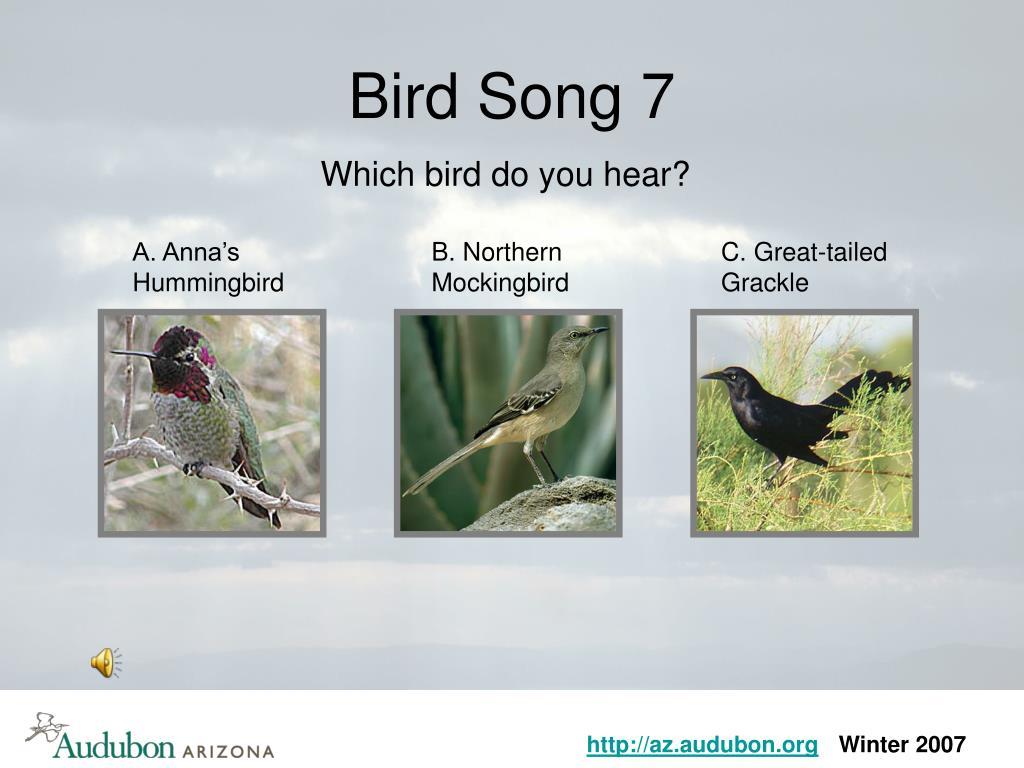 Bird Song 7