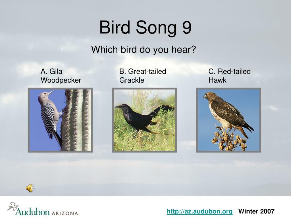 Bird Song 9