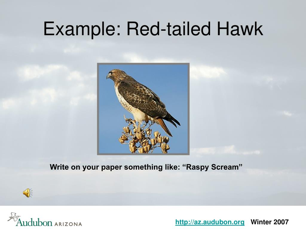 Example: Red-tailed Hawk