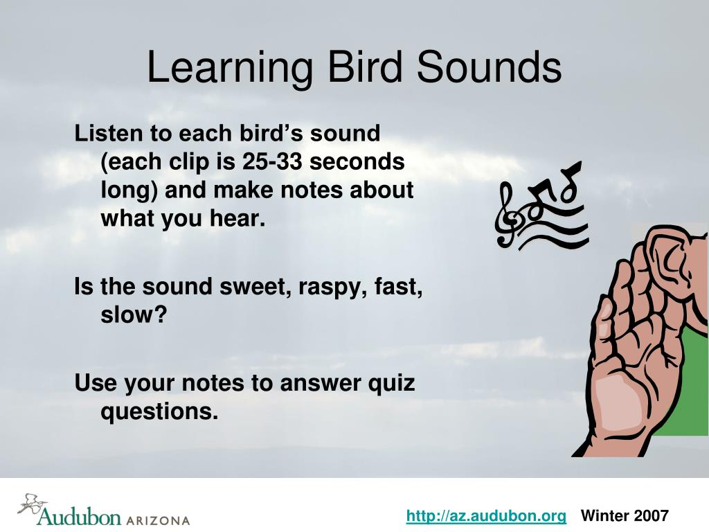 Learning Bird Sounds
