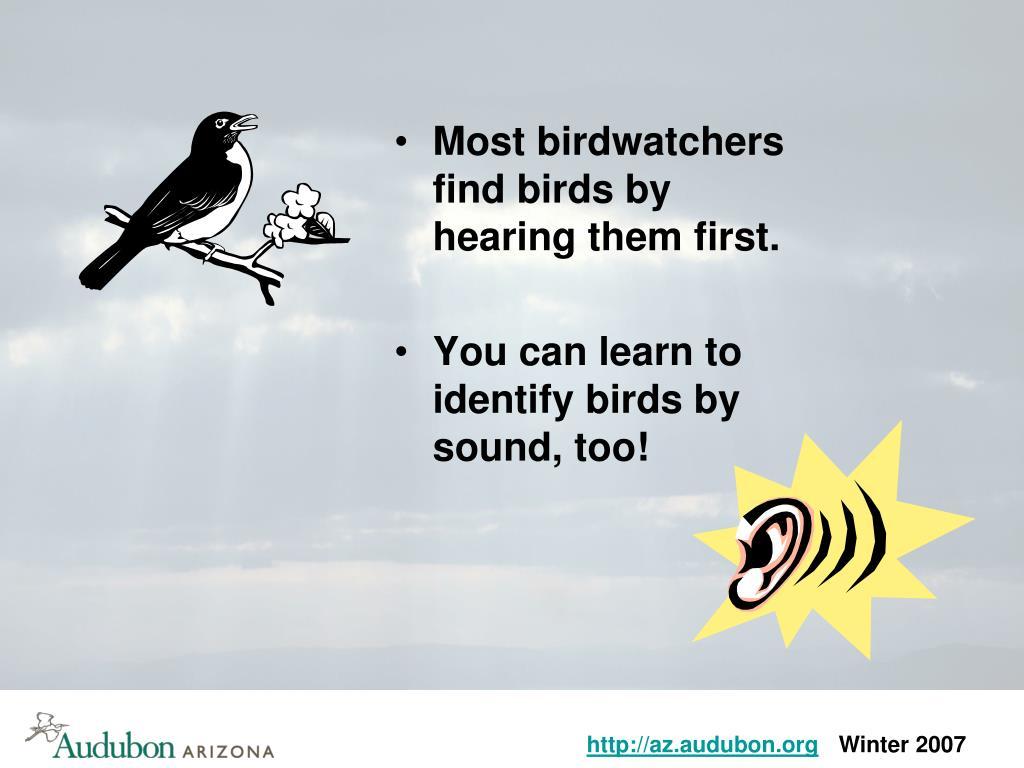 Most birdwatchers find birds by hearing them first.