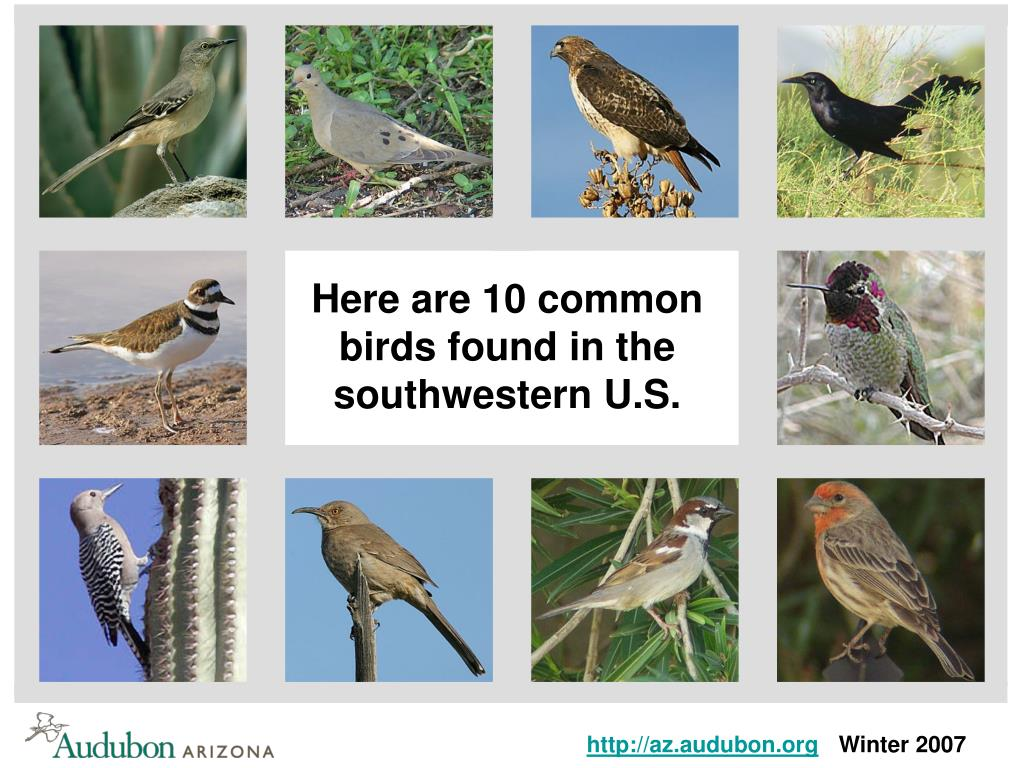 Here are 10 common birds found in the southwestern U.S.