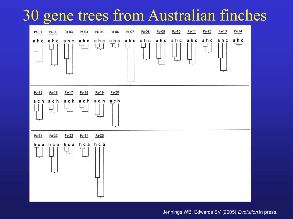30 gene trees from Australian finches