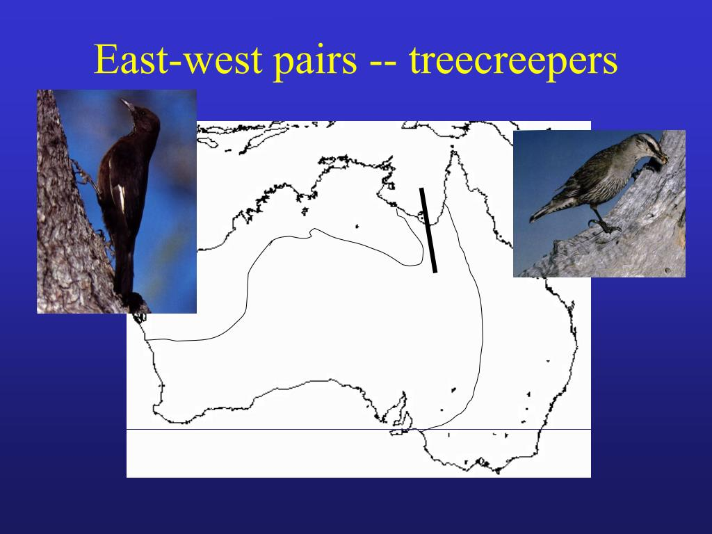 East-west pairs -- treecreepers