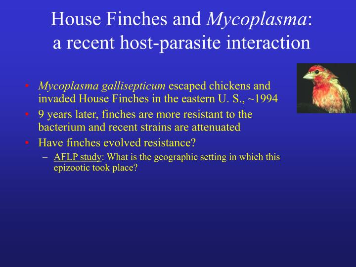 House finches and mycoplasma a recent host parasite interaction