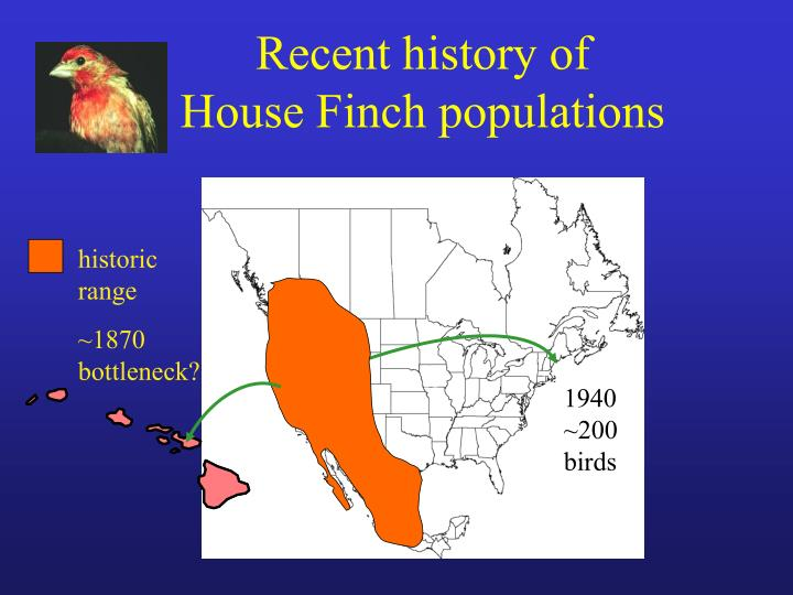 Recent history of house finch populations