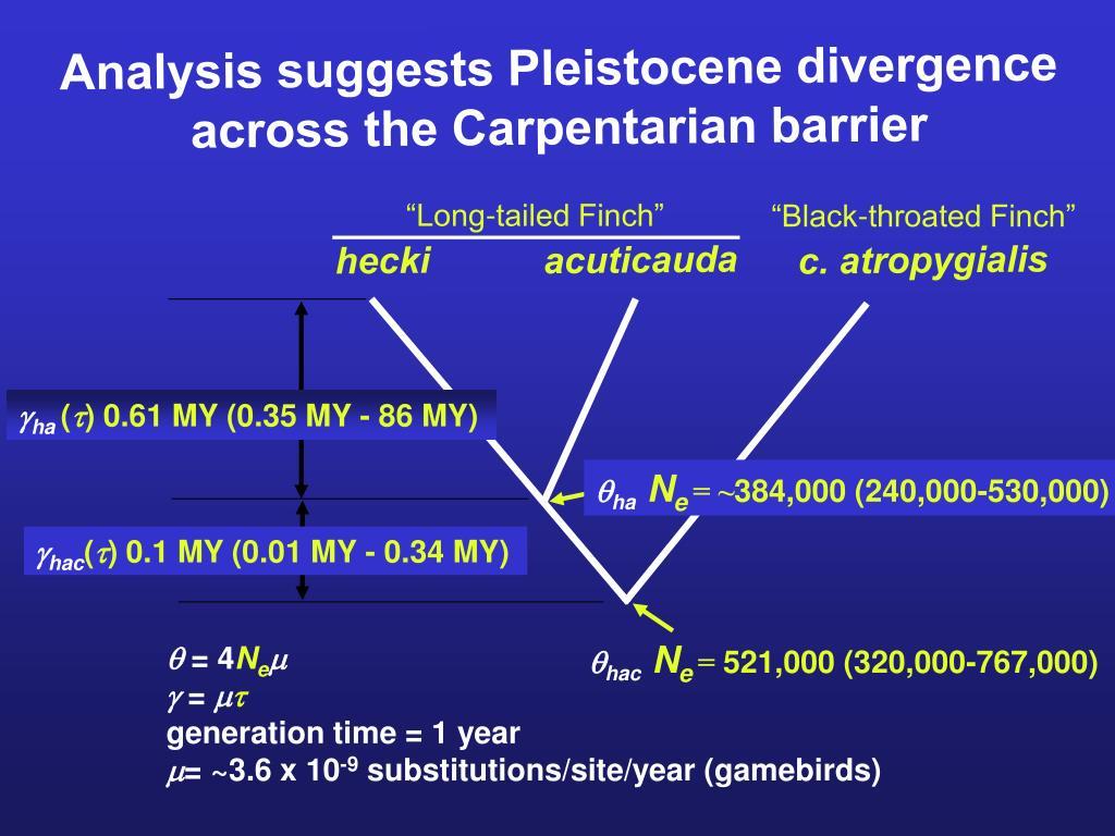 Analysis suggests Pleistocene divergence