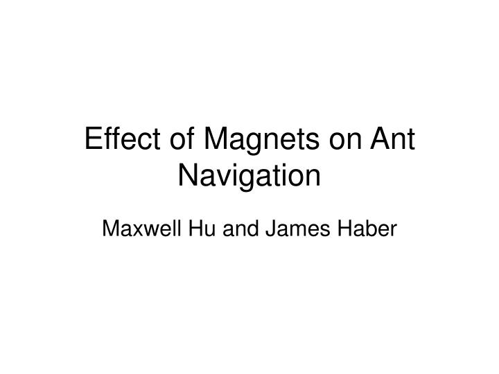 effect of magnets on ant navigation n.