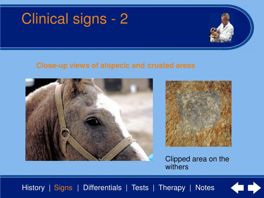 Clinical signs - 2