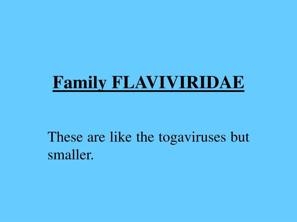 Family FLAVIVIRIDAE