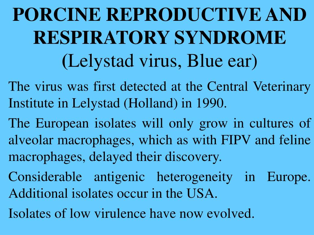 PORCINE REPRODUCTIVE AND RESPIRATORY SYNDROME (