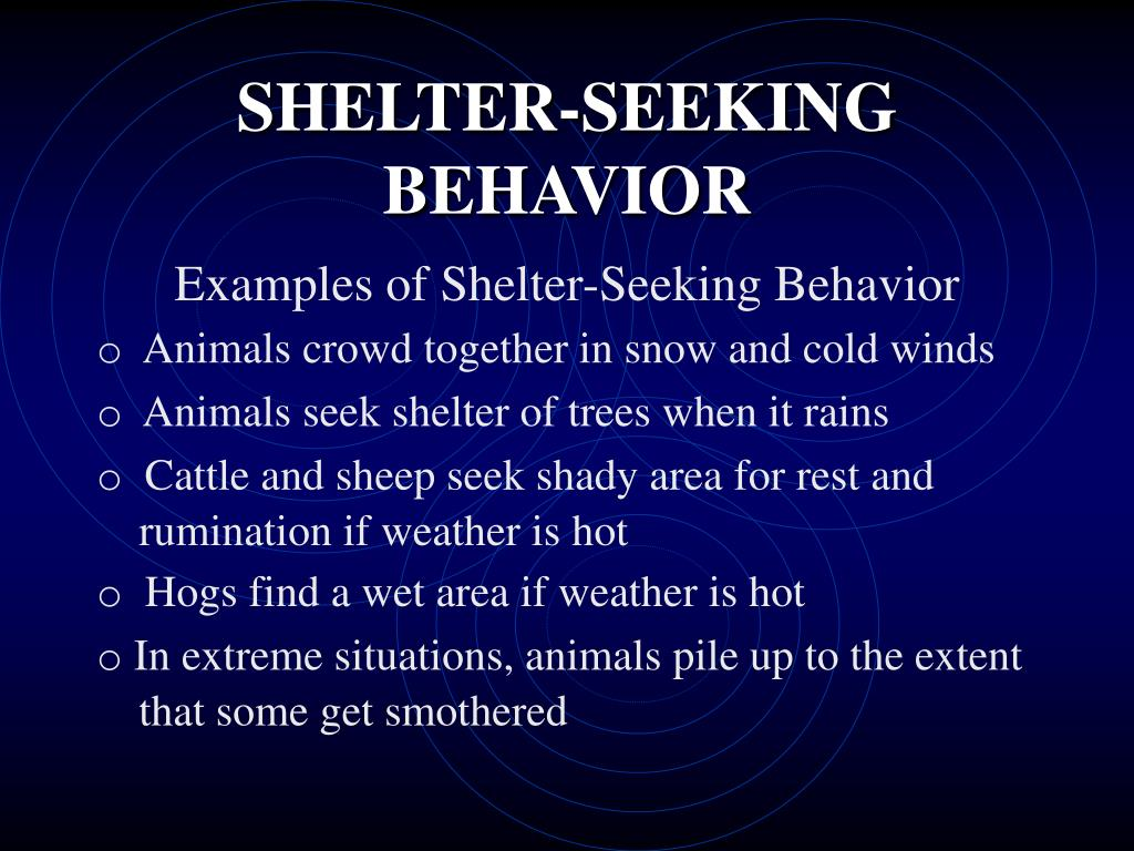 SHELTER-SEEKING BEHAVIOR