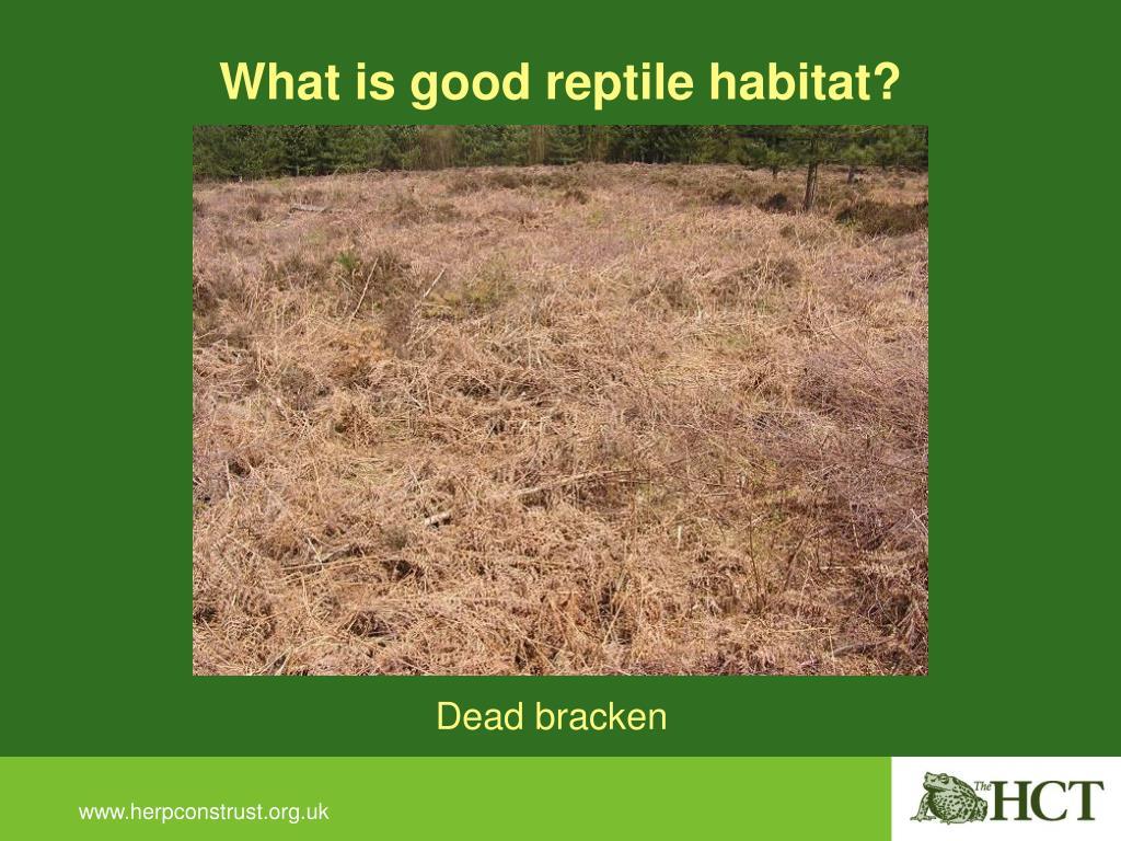 What is good reptile habitat?