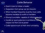 cattle behavior