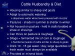 cattle husbandry diet