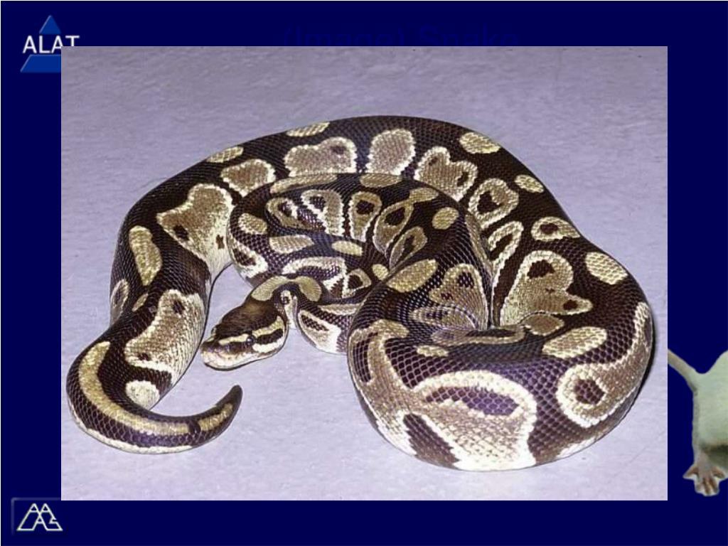 (Image) Snake