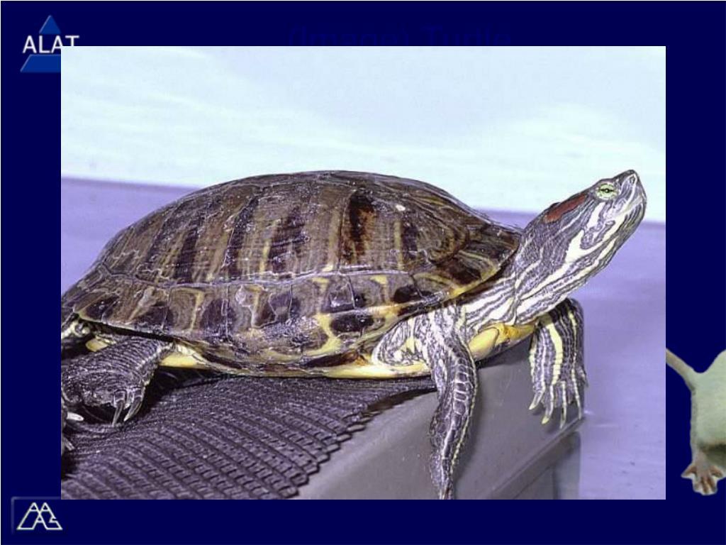 (Image) Turtle