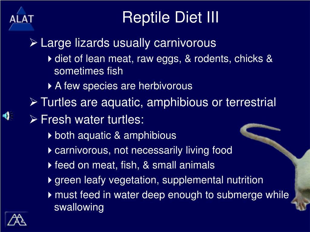 Reptile Diet III