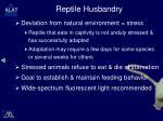 reptile husbandry