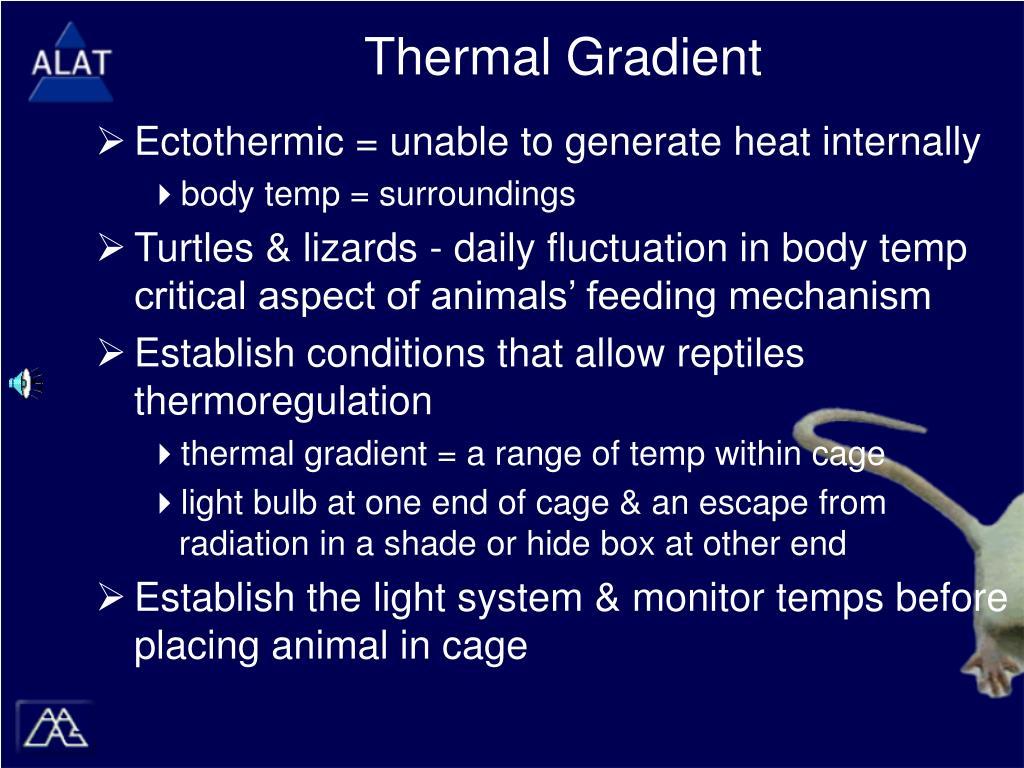 Thermal Gradient
