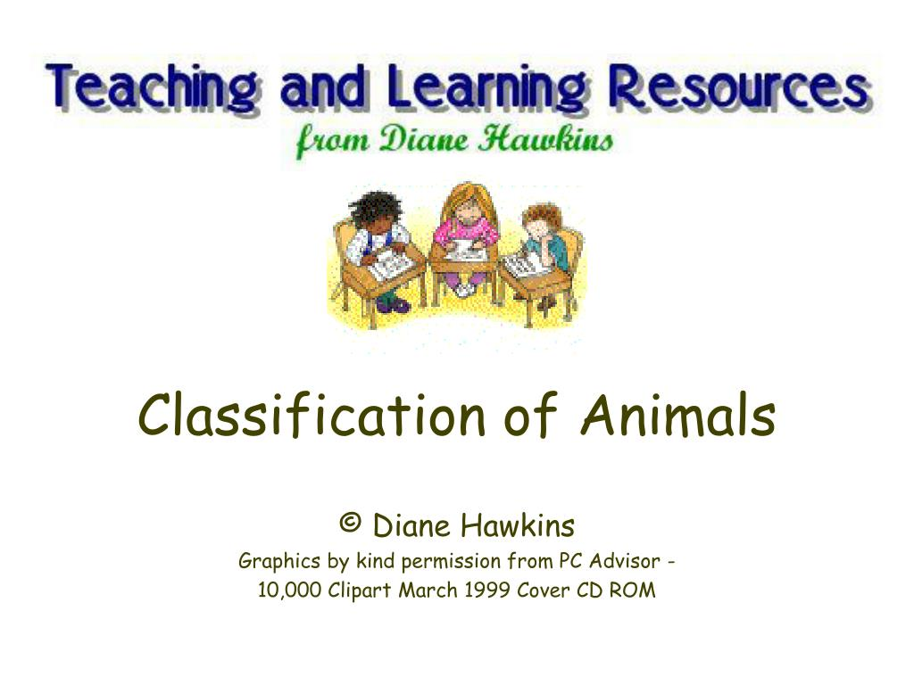 classification of animals l.
