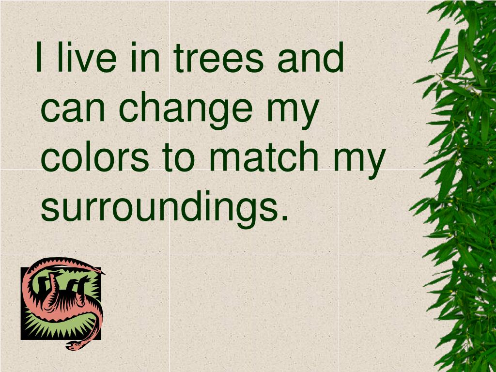 I live in trees and can change my colors to match my surroundings.