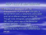 reptiles amphibians10