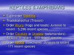 reptiles amphibians11