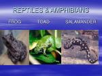 reptiles amphibians17