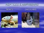 reptiles amphibians18