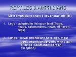 reptiles amphibians19