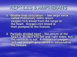 reptiles amphibians20