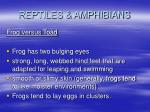 reptiles amphibians26