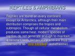 reptiles amphibians37