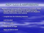 reptiles amphibians39
