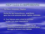 reptiles amphibians40