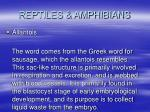 reptiles amphibians42