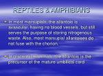 reptiles amphibians44