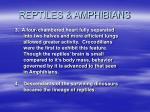 reptiles amphibians48