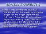 reptiles amphibians51