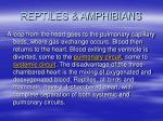 reptiles amphibians52