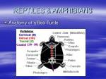 reptiles amphibians55