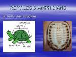 reptiles amphibians56