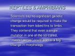 reptiles amphibians6