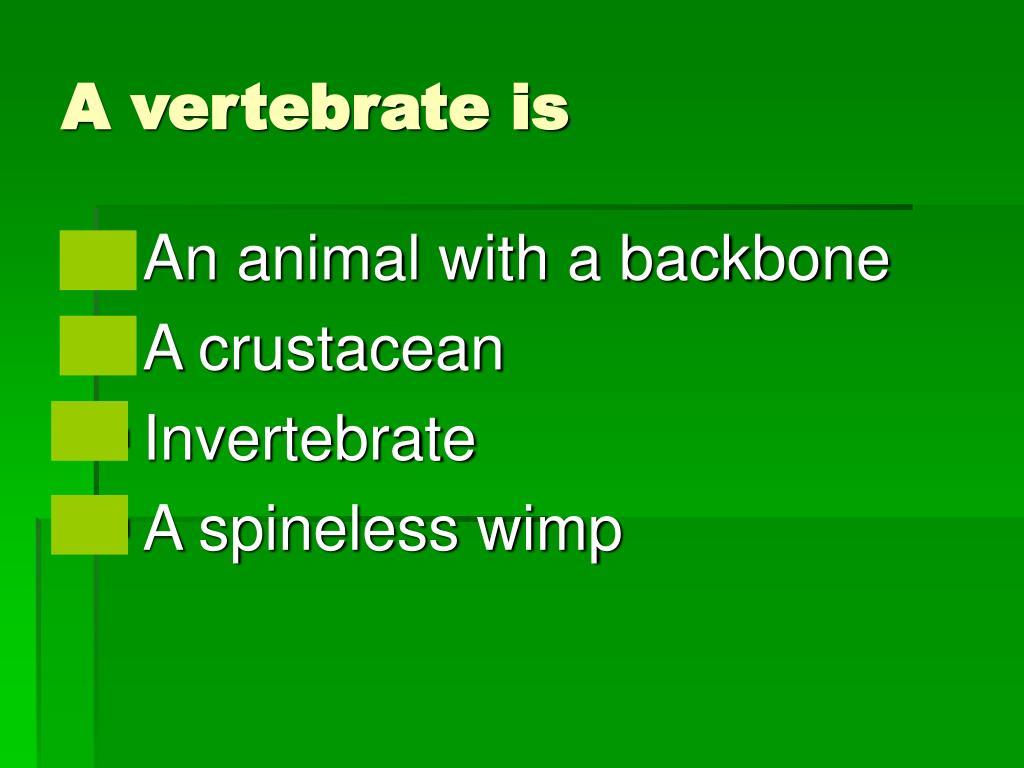 A vertebrate is