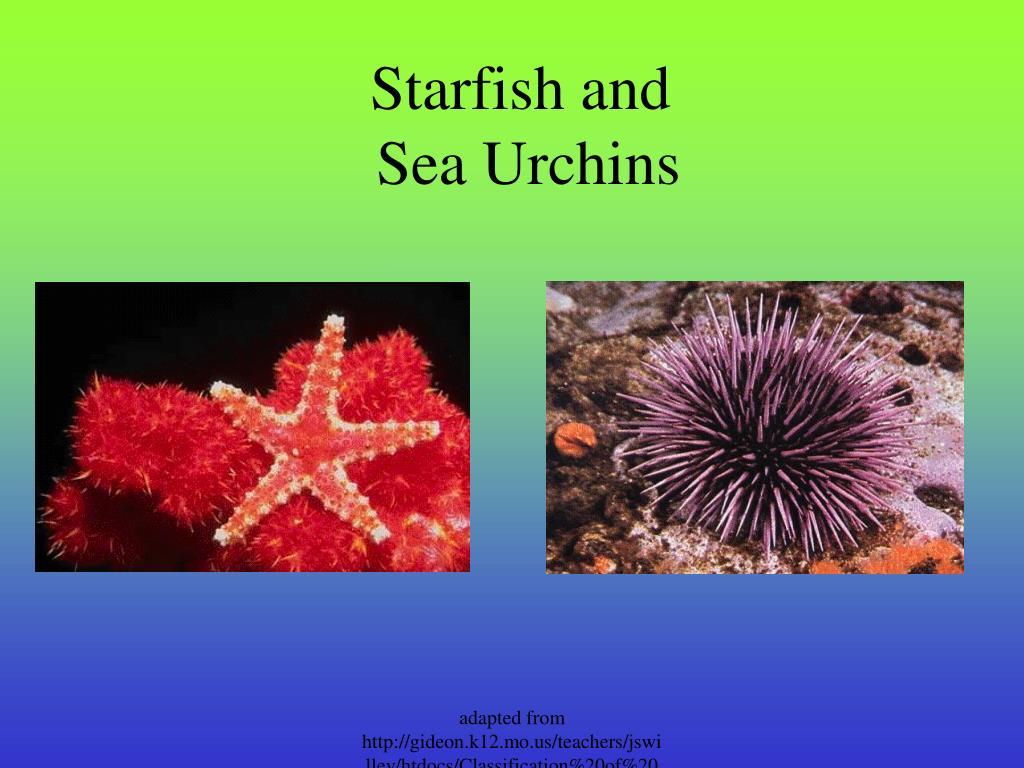 Starfish and