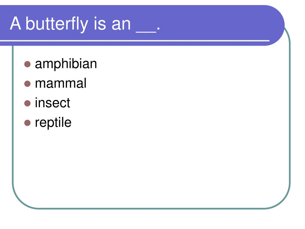 A butterfly is an __.