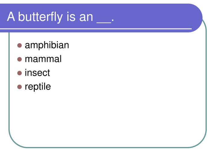 A butterfly is an