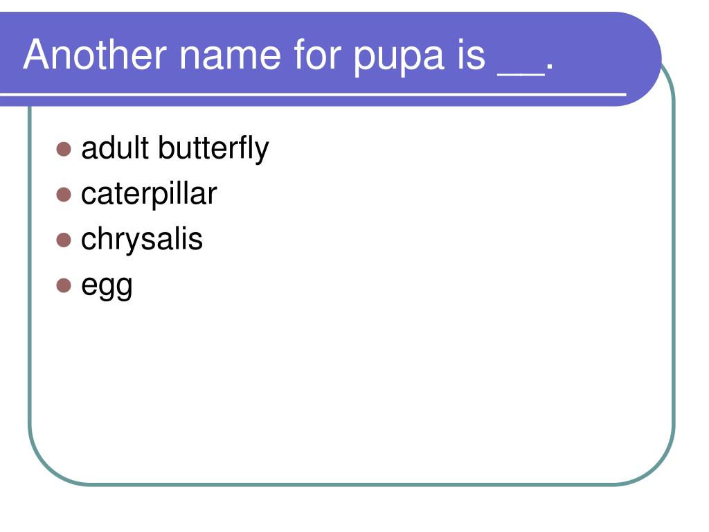 Another name for pupa is __.
