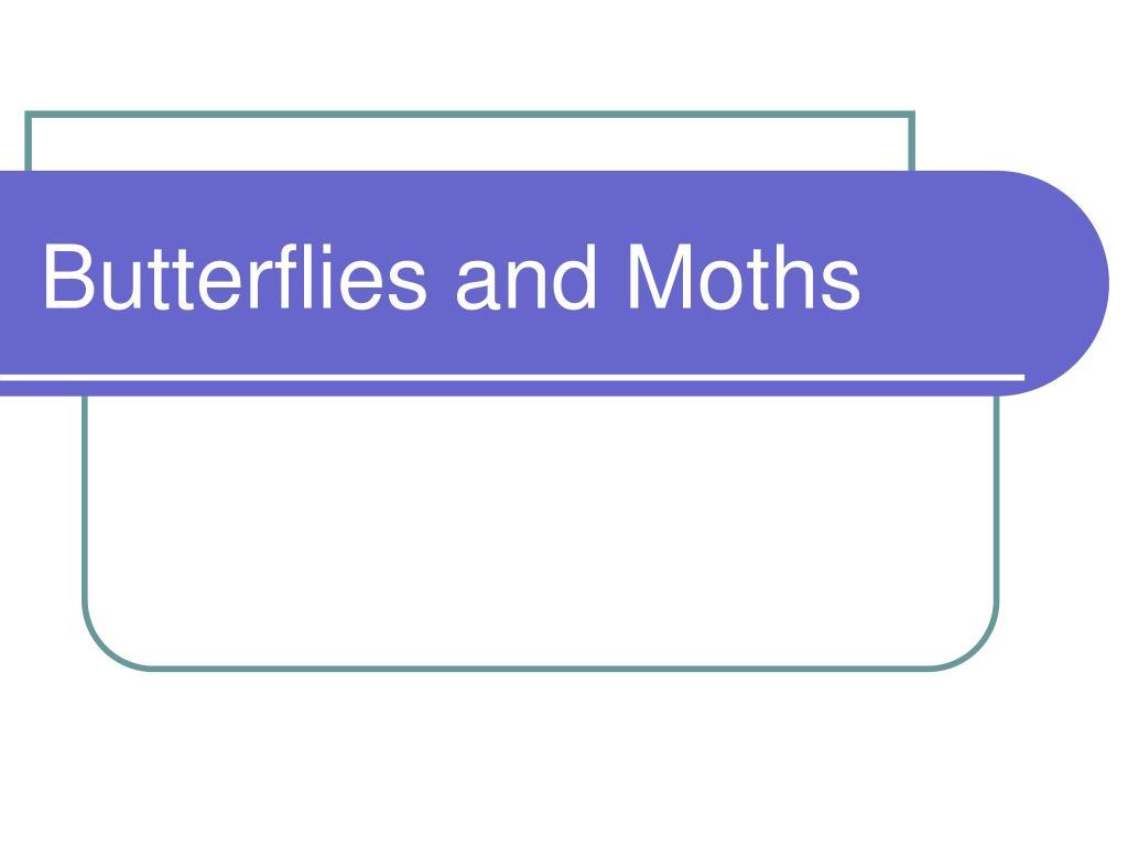 butterflies and moths l.